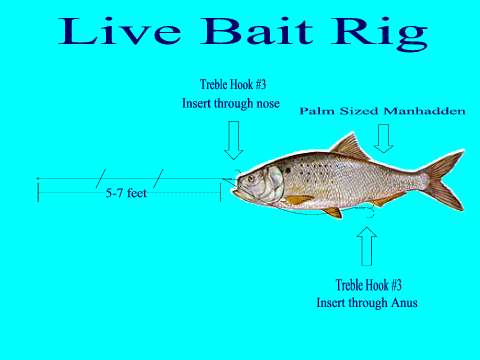 Trolling live bait for kingfish recipes