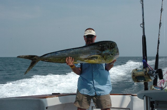 Saltwatercentral com about the fish dolphin a stong for Frying pan tower fishing