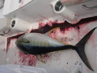 Spanish Mackerel: The Basics A GREAT Place to Learn How To Troll!