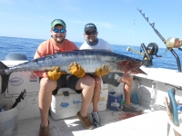 KING MACKEREL PERMIT