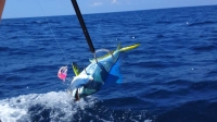Off Shore Fishing Rods/Reels and gear! - SaltwaterCentral.Com