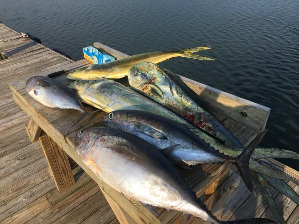 Saltwater fishing reports for Frying pan tower fishing