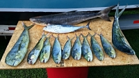 NC Fishing Reports