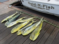 Mid Atlantic Inshore Fishing Reports