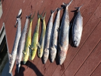 Trolling Rod Suggestions - SaltwaterCentral.Com
