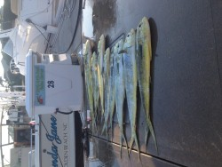 Fish Spanker Charters Carolina Beach NC